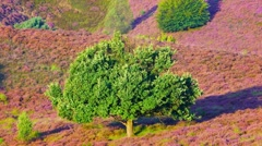 Oak tree moving in the wind Stock Footage