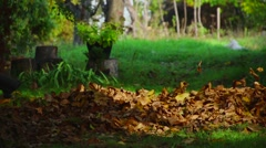 Cleaning Dry Leaves With Blower 03 - stock footage