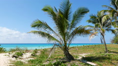 Varadero Palm Beach Ocean Cuba Stock Footage