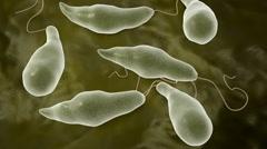 Euglena microbe. Stock Footage