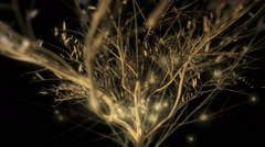 Golden Tree - 60fps VJ Loop. Concert Decoration Stock Footage