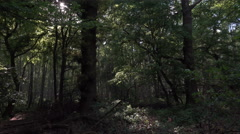 4k Dark magic fairytale dense forest panning shot spring season - stock footage
