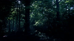 4k Dark eerie spooky dense forest panning shot spring season Stock Footage