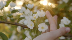 Flowers and child hand in the sunlight - stock footage