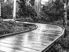 Narrow wooden path in the forest - stock photo