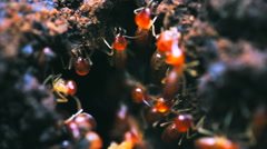 Red big ants crawl on a ground Stock Footage