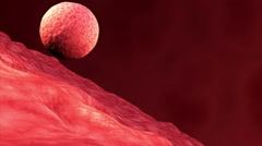 Implantation of embryo. Stock Footage
