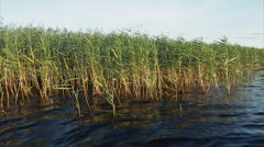 Riverside with a lush green reed Stock Footage