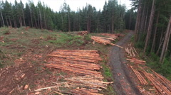 Logging on Tree Farm Stacked Trees Aerial Stock Footage
