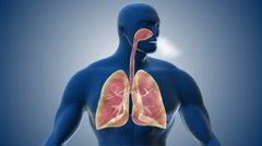 Visualization of human respiratory system. Stock Footage
