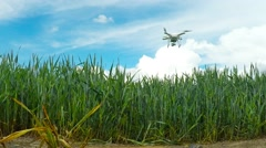Drone over field. Stock Footage