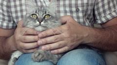 man caressing his cat - stock footage