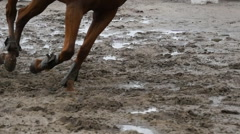 Feet of horse running on mud. Slow mo - stock footage