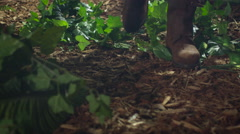 Shot of Adventurer Legs Walking through Jungle Forest - stock footage