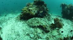 Wobbegong Shark on Seafloor Stock Footage