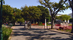 Cape Town - South Africa - Company's Park Horse Drawn Carriage - stock footage