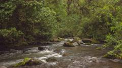 River running through cloudforest in Ecuador Stock Footage