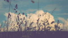 Grass straws close up with clouds on background. Germany Stock Footage