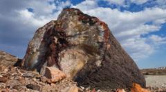 Dazzling Petrified Log in Arizona (4K) Stock Footage