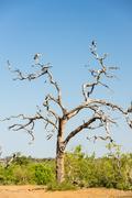 Marabou Stork Birds Stock Photos