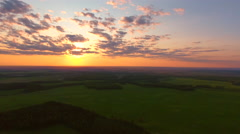 Aerial View. Flying over the field of forest at sunset with the sun's rays. - stock footage