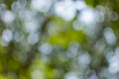 Abstract bokeh nature - stock photo