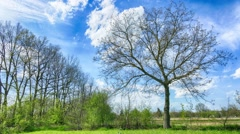 Countryside timelapse. Moving clouds over old big tree from left to right. - stock footage