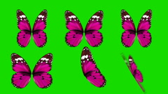 Set of Pink Butterfly Wings Waving in Different Speed and Angles on Green Screen - stock footage