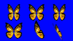 Set of Yellow Butterfly Wings Waving in Different Speed and Angle on Blue Screen - stock footage