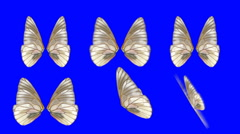 A set of Butterfly Wings Waving in Different Speed and Angles on Blue Screen - stock footage