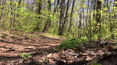 Boy riding a bike through the woods Stock Footage