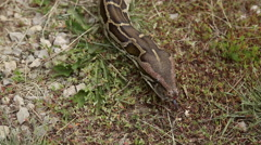 Snake crawling on the ground Stock Footage