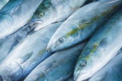 Fresh raw fish in the sea food market Stock Photos