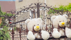 Two teddies bears on the fence in the wedding day Stock Footage