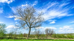 Countryside timelapse. Moving clouds over old big tree from left to right - stock footage