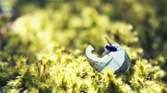 Broken Egg lying on moss. A fly sits on it. RAW video record Stock Footage