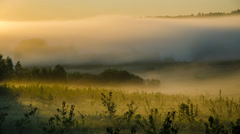 Glade in early morning covered with a dense fog. Stock Footage