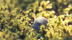 The shell of the eggs fell on the moss. The little bird hatches from the egg Stock Footage