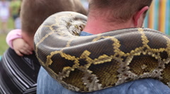Huge snake Python around the shoulders of man Stock Footage