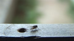 House fly 02 Stock Footage