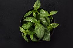 Bunch of fresh organic basil on black background Stock Photos