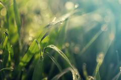 Fresh morning dew on spring grass, natural background Stock Photos