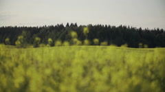 Rapeseed Field and Forest on a Horizon Slidecamera Stock Footage