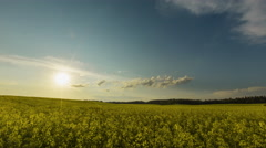 Sunset Over Yellow Rapeseed Field Stock Footage