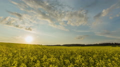 Sunset Over Yellow Rapeseed Field - stock footage