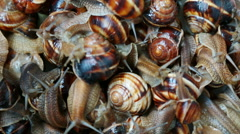 Many live grape snails slowly creep the friend on the friend - stock footage