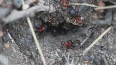Ants in an anthill close-up - stock footage