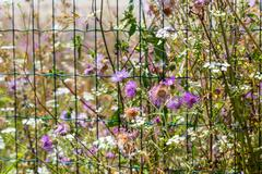 Flower and plants growing near fence Stock Photos