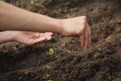 woman planting seeds in the garden - stock photo