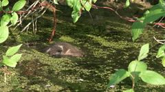 Young birds ducklings. Stock Footage